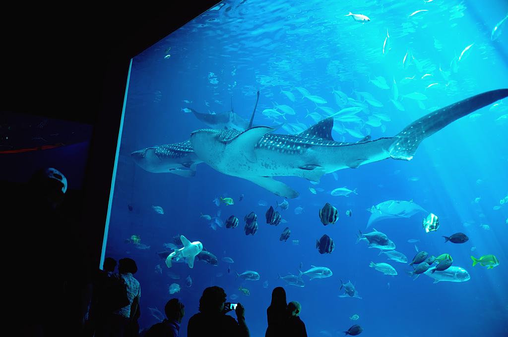Georgia Aquarium Imagination Nights The Peach Review